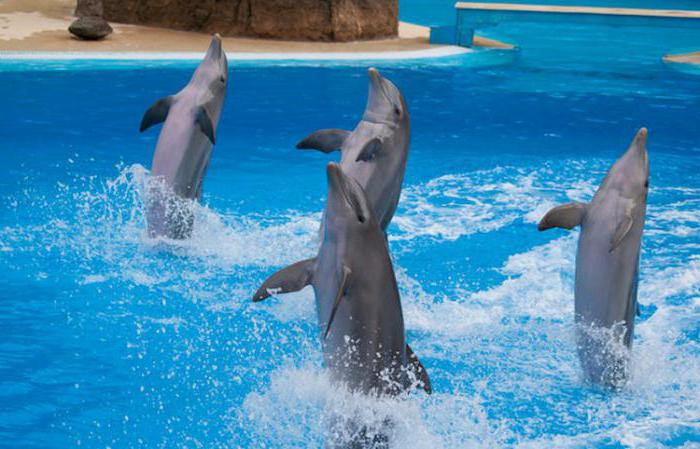 bottlenose dolphin interesting facts