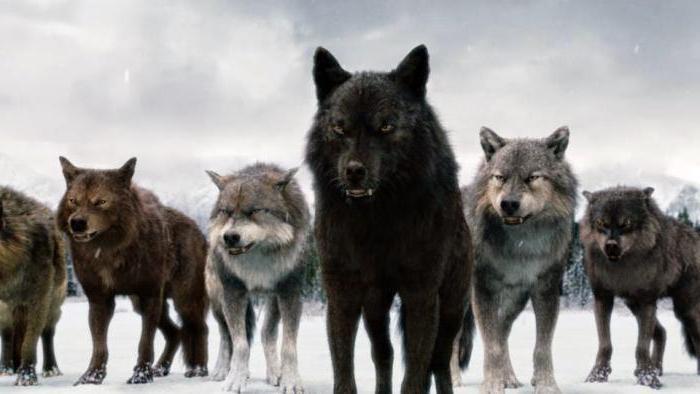 Видеть во сне волка значения снов