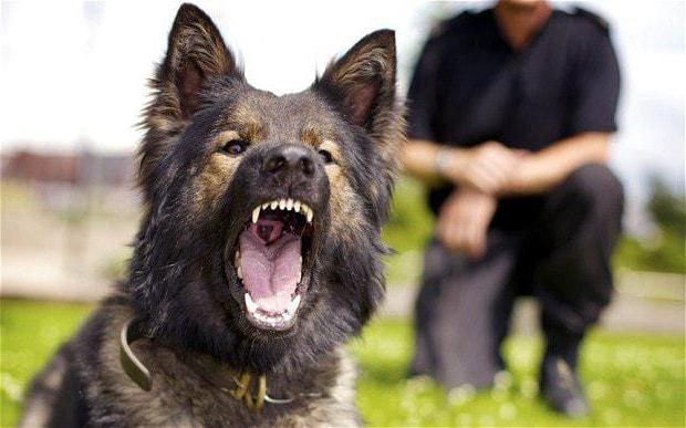 к чему снится нападает собака