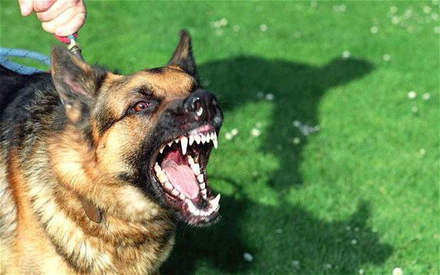 сонник напала собака к чему