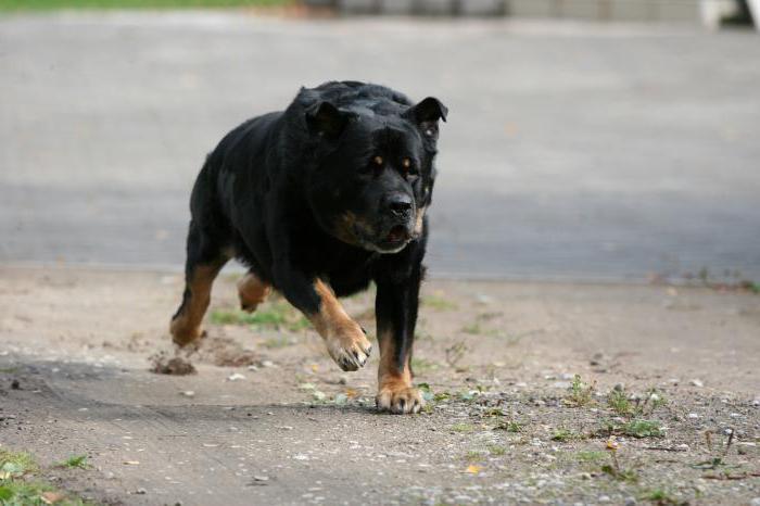 сонник собака нападает толкование
