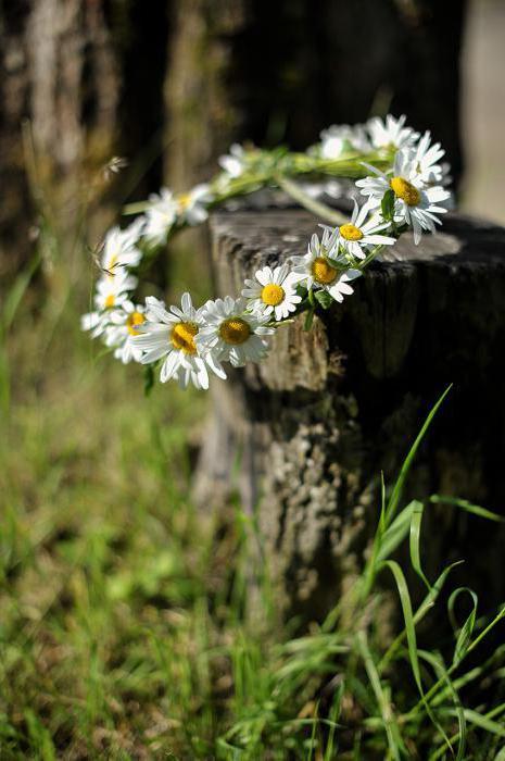 К чему снится ромашка? Цветы во сне