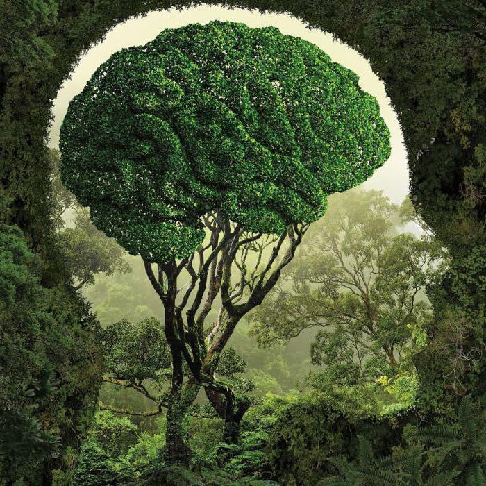 природа в жизни человека аргументы из литературы