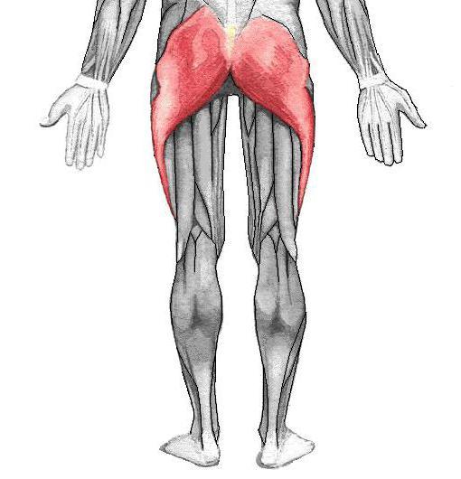 боль в левой ягодице отдающая в ногу