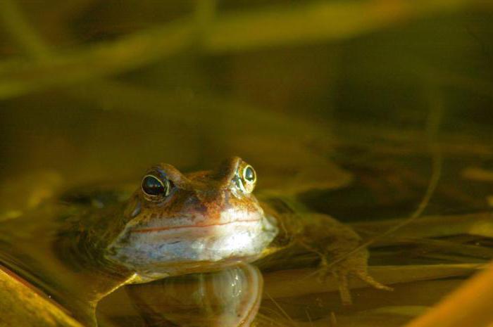 Чем питаются лягушки в домашних условиях
