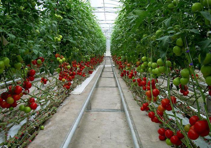 Огурцы гидропоника своими руками для огурцов и томатов