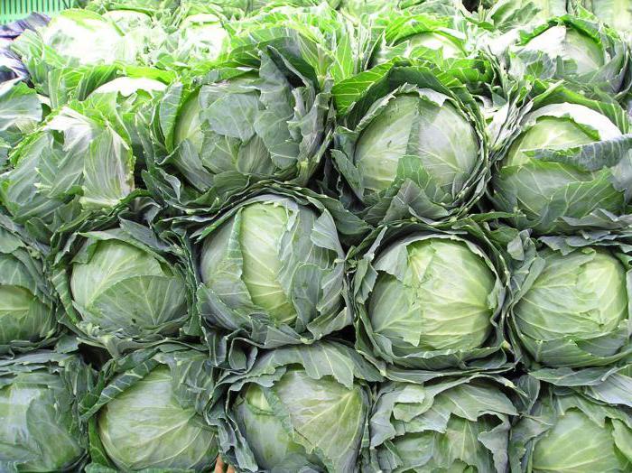 лечебные свойства капустного листа при головной боли