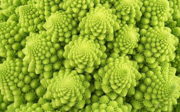 The best varieties of cauliflower