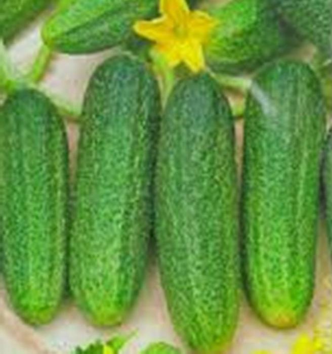 "Cucumbers ""Libella"""