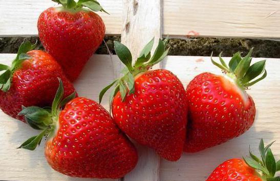 Alba Strawberry