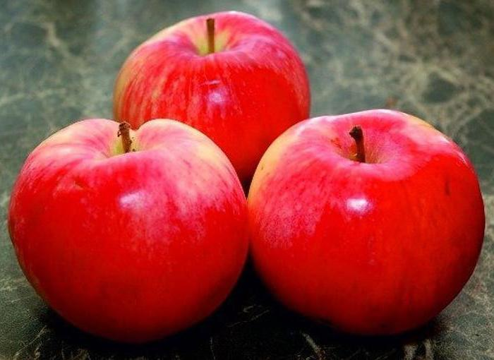 apple tree delight reviews photos