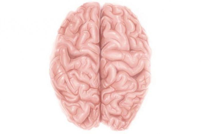участки коры головного мозга