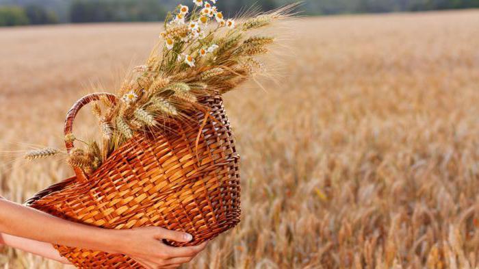 виды хлебных злаков