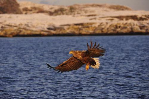 eagle rocks how to get
