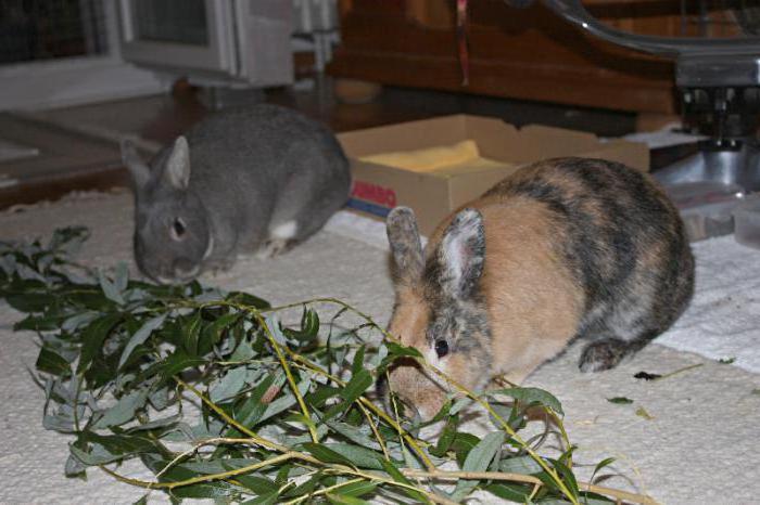 Какую траву нельзя кроликам