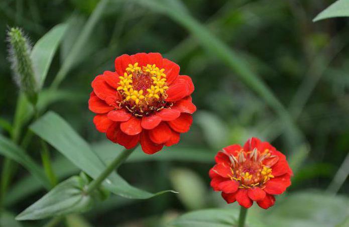 flowers majors planting