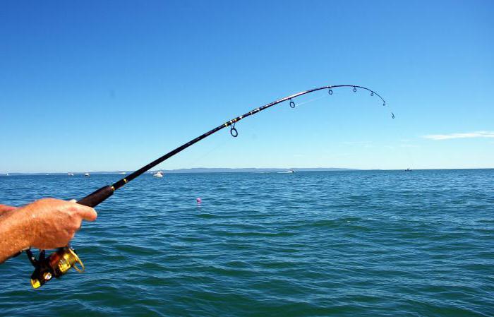 куда поехать на рыбалку в Подмосковье бесплатно