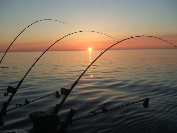 бесплатные пруды для рыбалки в Подмосковье