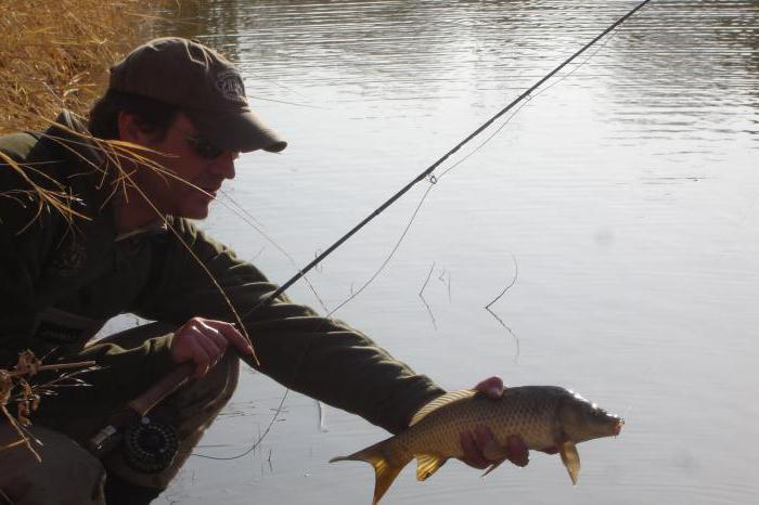 бесплатная рыбалка в Подмосковье отзывы