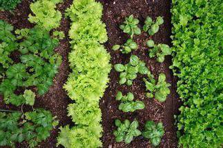 несовместимые растения
