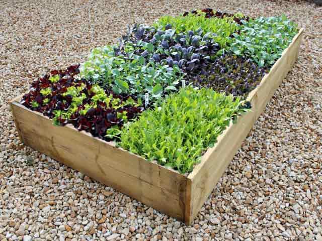 растения соседи на грядках