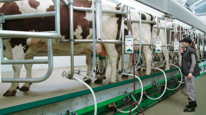 milk parlour Purchase: when you purchase your milking parlour, you decide on what the optional extras you wantif, after a number of years, you want to sell your mobistar, you can do this yourself of course, but we can also assist you with the sale.