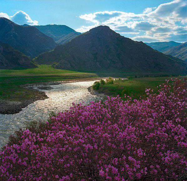 Resort Arshan Buryatia
