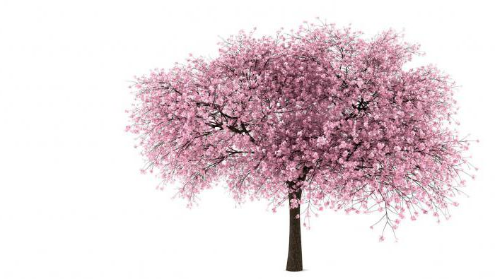 cherry orchard composition