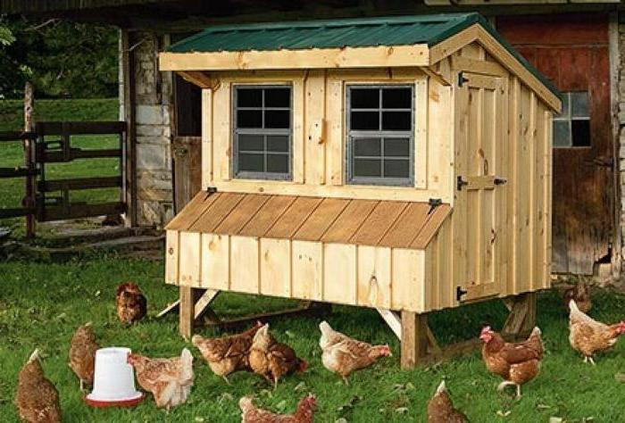 house for laying hens