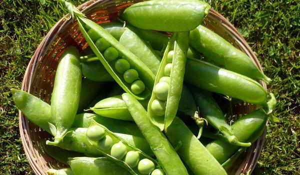 varieties of peas