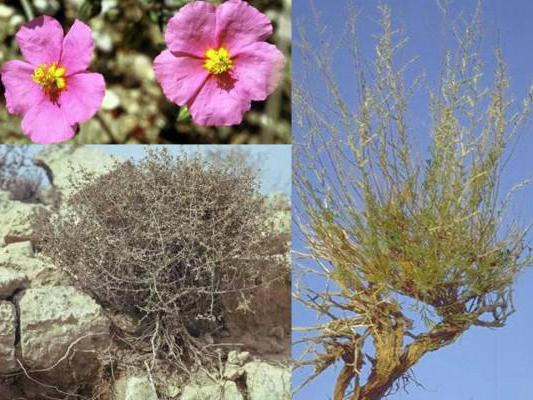 what ecological plant groups