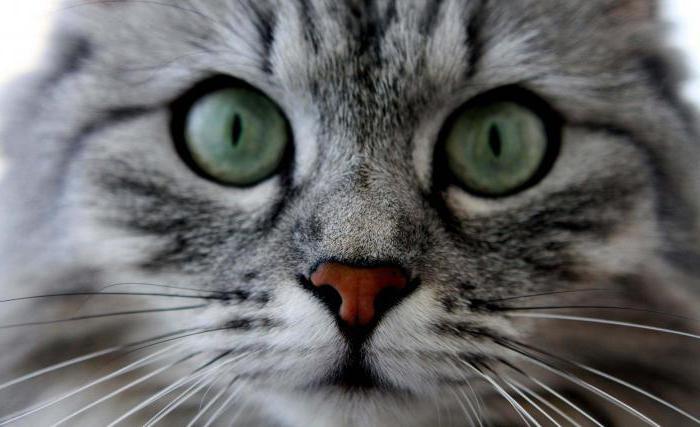 dream cat black cat