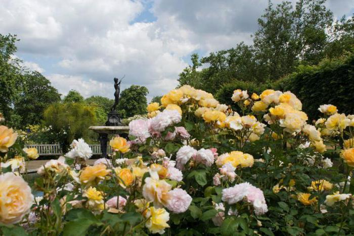Park roses varieties for the suburbs of Canadian breeding