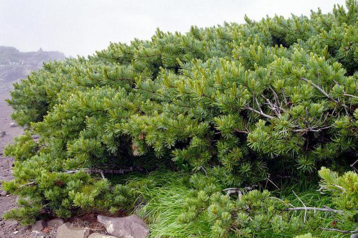 забайкальский национальный парк рельеф