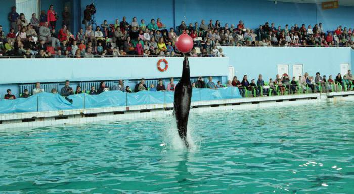 dolphinarium in st. petersburg photo