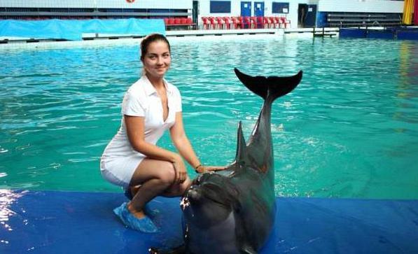dolphinarium krestovsky island st petersburg