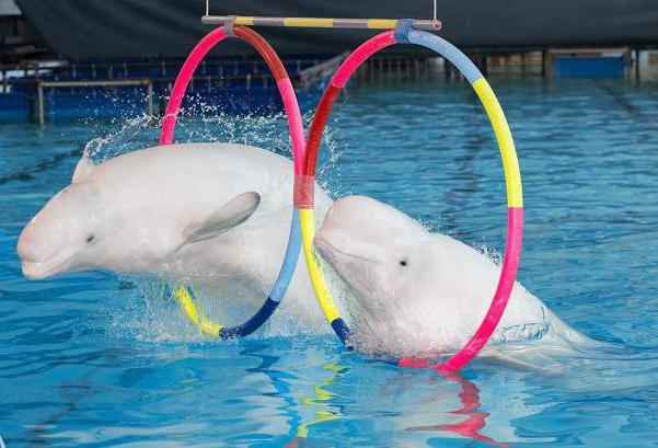 Dolphinarium St. Petersburg Kupchino