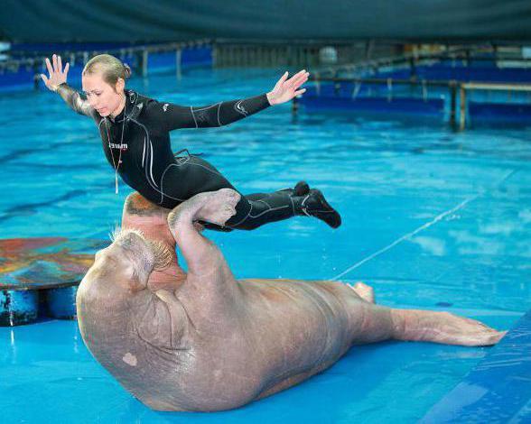 Dolphinarium in St. Petersburg