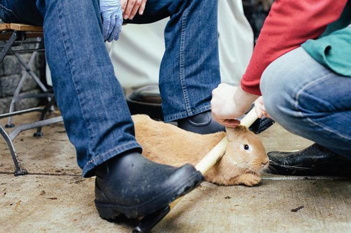 разделка кролика