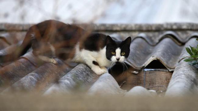 как отвадить кошек от участка
