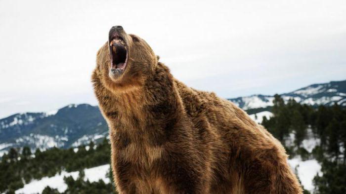 медведь людоед страшные истории