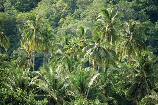 Tropical forests of the peninsula of Malacca