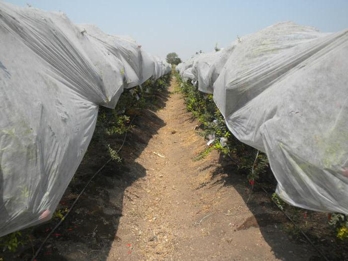 nonwoven covering material for greenhouses