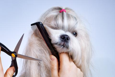 comb for dogs with long hair