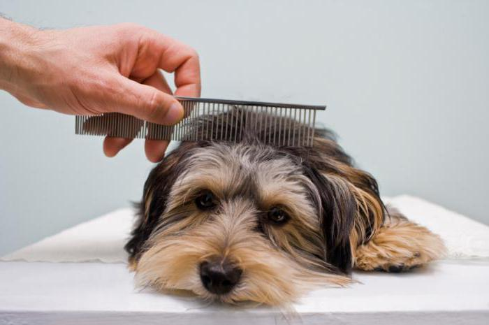 types of combs for dogs