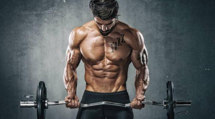 biceps and triceps exercises