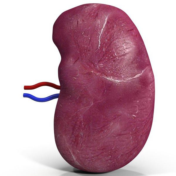 spleen size is normal in adults