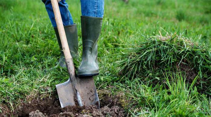 сонник копать землю лопатой