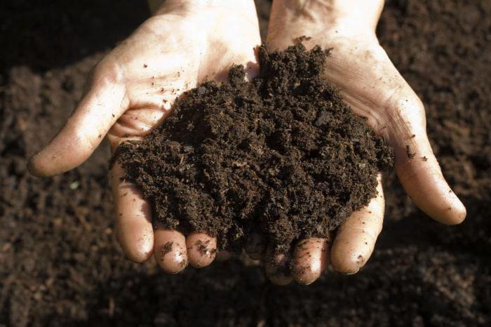 сонник копать землю в огороде