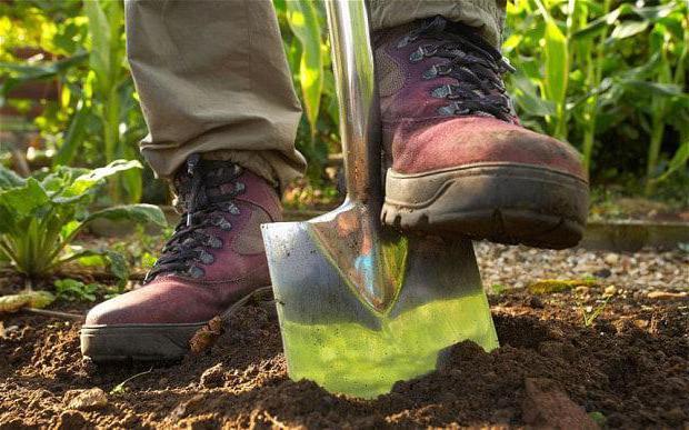 сонник копать землю руками